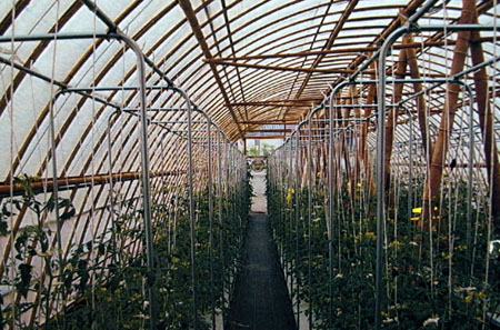 Bamboo Greenhouse