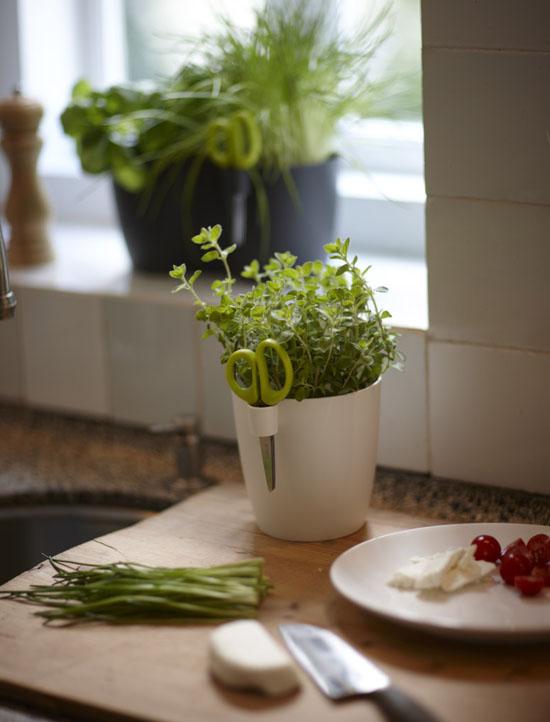 Brussels Herbs