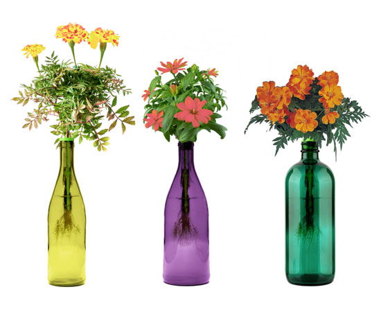 Edible Flowers – Bottle Garden Kit
