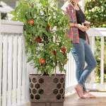 Gardener's Revolution Tomato Garden Kit Features Self-Watering System and Optimal Tomato Production