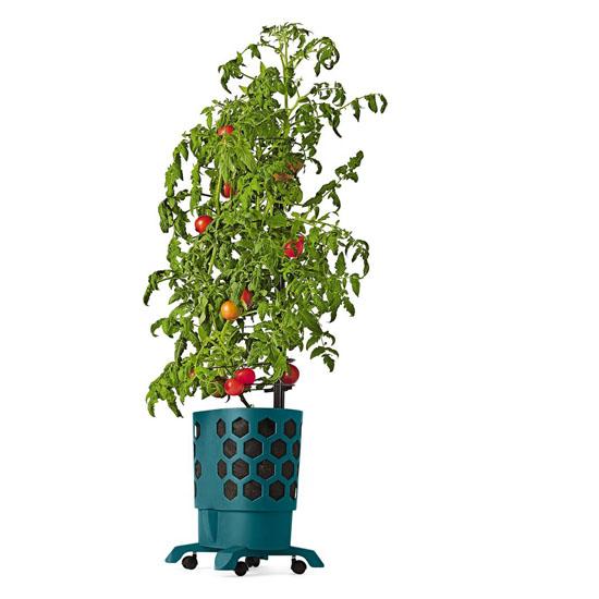 Gardener's Revolution Tomato Garden