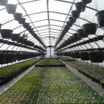 How to Start Your Greenhouse Gardening - The Basic