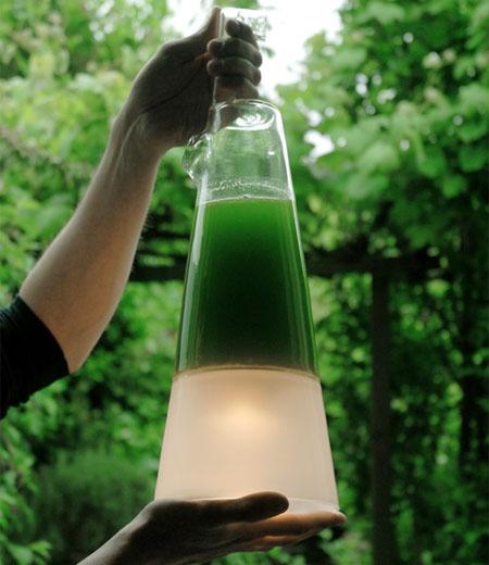 Latro Algae Lamp