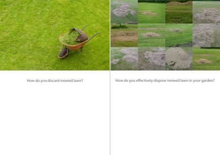 Lawn Beetle