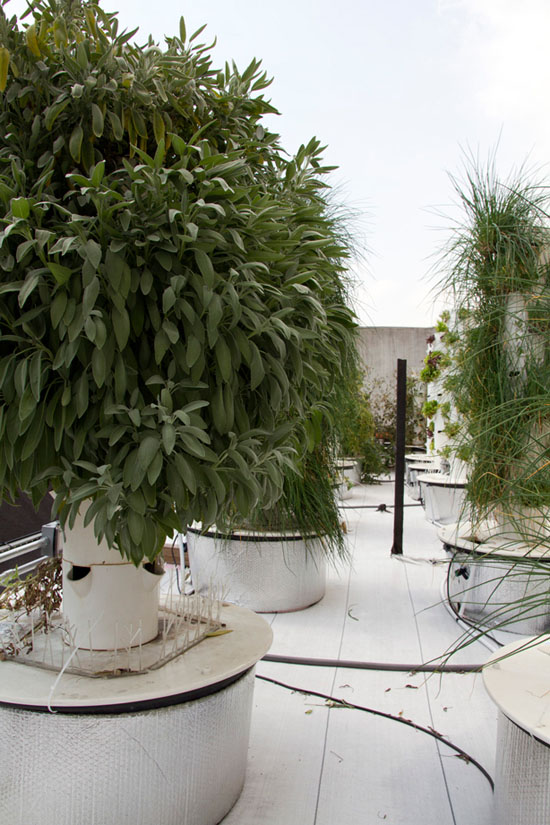 Rooftop Vertical Farm