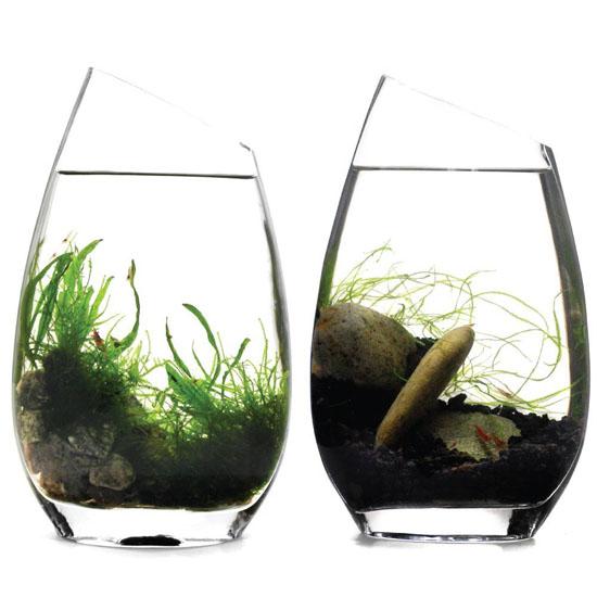 BLUEiQ Miniature Ecosystem