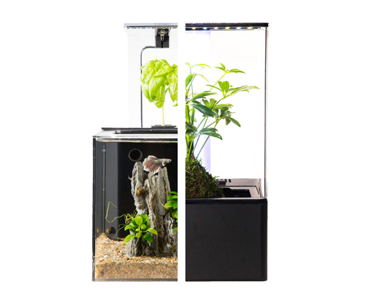 EcoQube - Simple, Self-Sustainable Ecosystems for Nature in Home