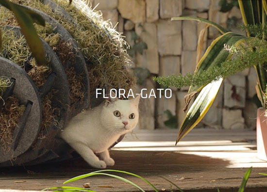Flora-Gato Cat Shelter from Recycled Plastic – Arktura Architects for Animals