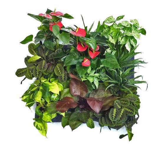 Green Field Eco-Friendly Vertical Garden Wall Planter