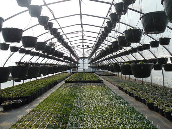 How to Start Greenhouse Gardening