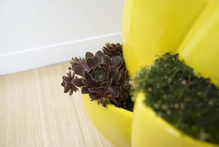 Nature Ceramic Planter