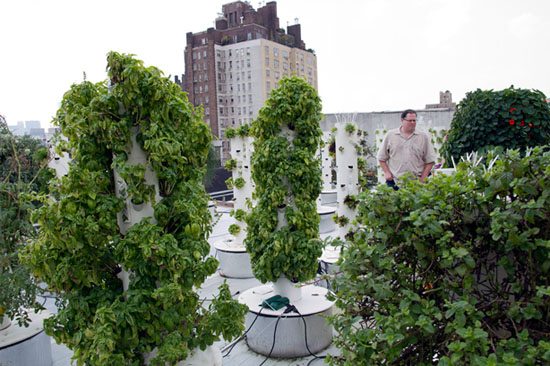 Rooftop Vertical Farm