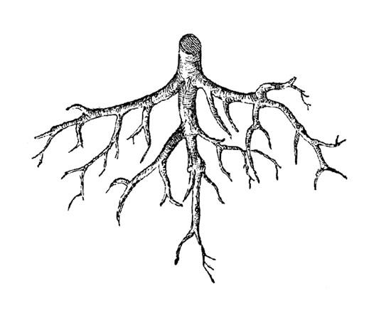 Root Pendant Light by Victor Vetterlein